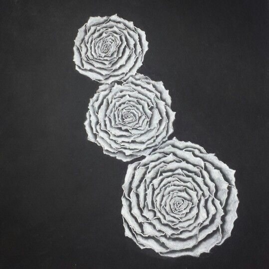 Roses, black and white, pencil drawing by Madeleine Hoffman