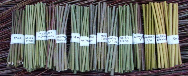Some beautiful willow cutting varieties from Dunbar Gardens