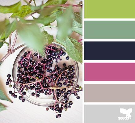 elderberry hues