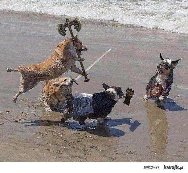 wiking dogs