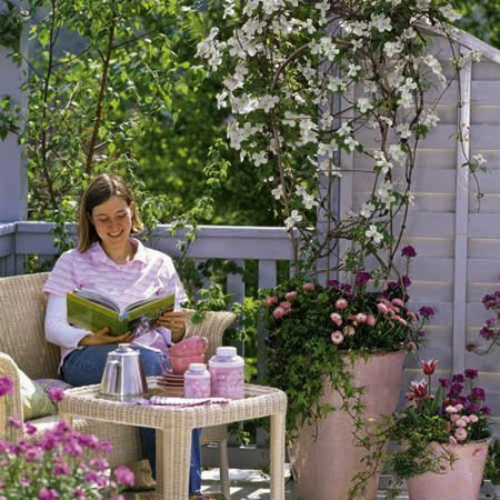 images of jasmine in containers trellis jasmine clotted. Black Bedroom Furniture Sets. Home Design Ideas