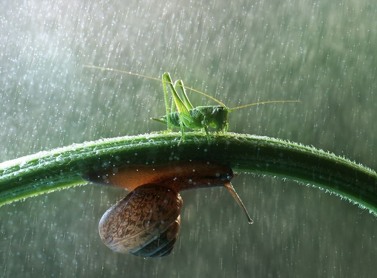 It is a familiar feeling for those of us who have been caught in a downpour on the way to work.    However, the insect world also struggles with the wet weather, these astonishing pictures show. They reveal that during a downpour, insects will do anything to get out of the way of giant (for them, anyway) raindrops - even occasionally using other insects as a makeshift umbrella.