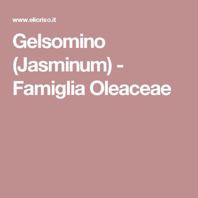 Gelsomino (Jasminum) - Famiglia Oleaceae