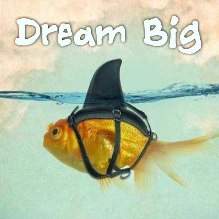 Dream big goldfish google search great quotes for Dream about fish out of water