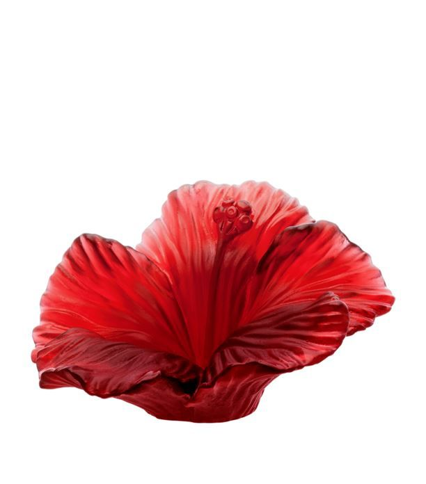 Daum Hibiscus Flower available to buy at Harrods.Shop home accessories online and earn Rewards points.