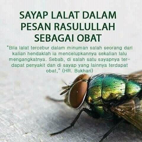 Sayap lalat