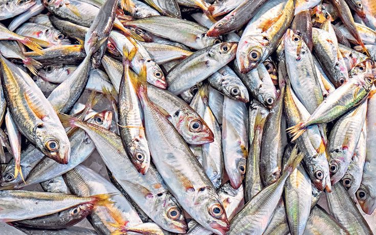 Stories of plummeting stocks have turned many consumers away from seafood, but   could little fish such as sardines save the day?