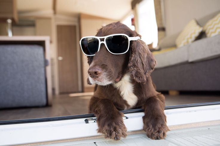 Looking cool! Sprocket dog chilling in the pet friendly accommodation at Braddicks Holiday Centre, Westward Ho! North Devon.
