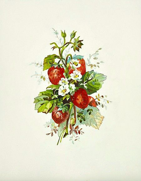 Small Strawberries by May Cornet