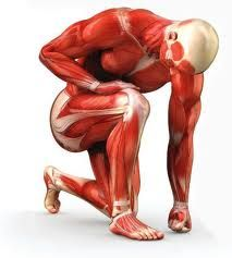 Knowing a bit about muscle hypertrophy takes your training to a whole new level.