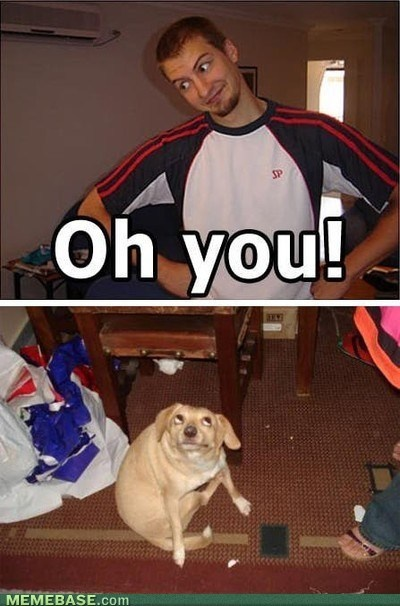 bahaha!Laugh, Funny Stuff, Humor, Things, Funny Animal, Hilarious, So Funny, Giggles, Dogs Face