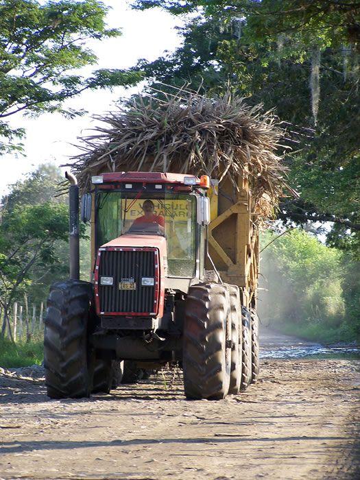 VALLE DEL CAUCA   Tras ser cortada la caña de azúcar, esta es llevada a los ingenios azucareros en largos remolques llamados trenes cañeros.
