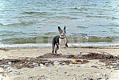 Dog on the beach near the waves