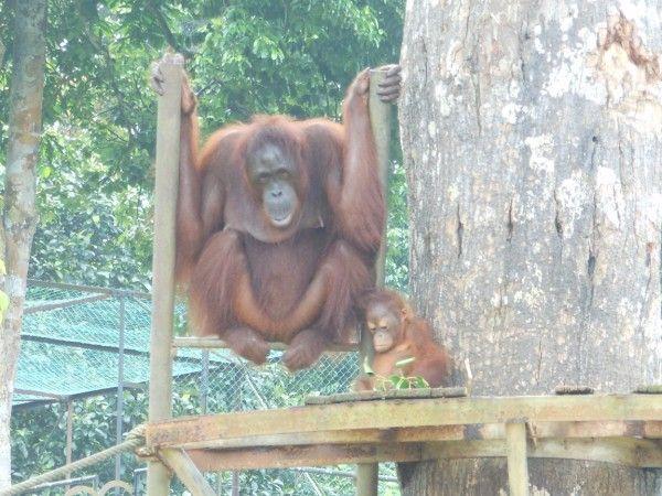 10 Fun Things To Do in Penang Malaysia with Kids via Bohemian Travelers -