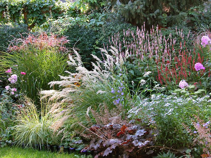 Lovely planting of grasses, Persicaria, daisies and Heuchera.