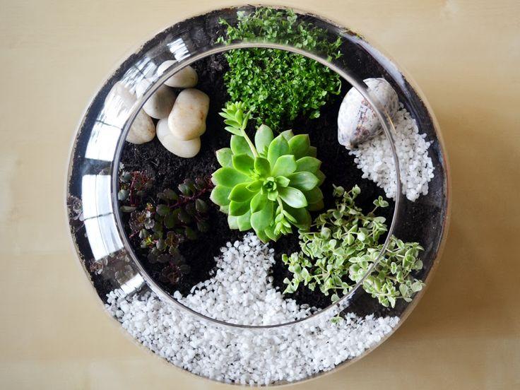 Per realizzare un terrario di piante grasse, o succulente, basta seguire pochi semplici passaggi.