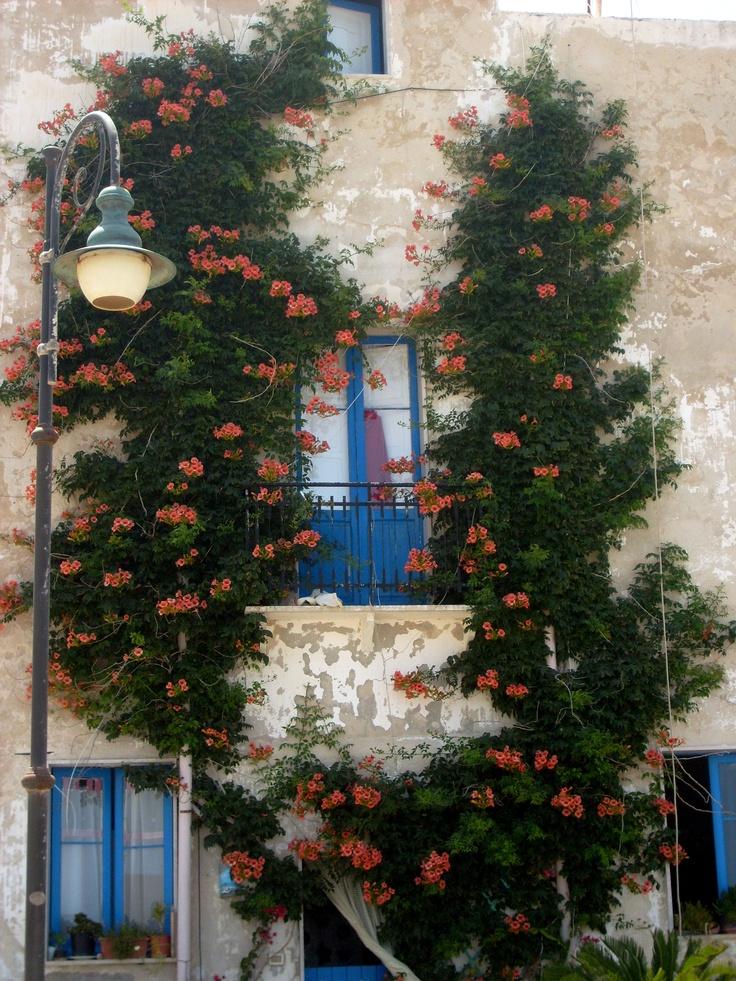 Marettimo (Egadi-Sicilia)