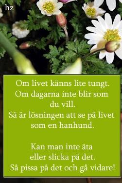Lisbet Olofsson, the one and only | Västerbottens-Kuriren - Bloggen