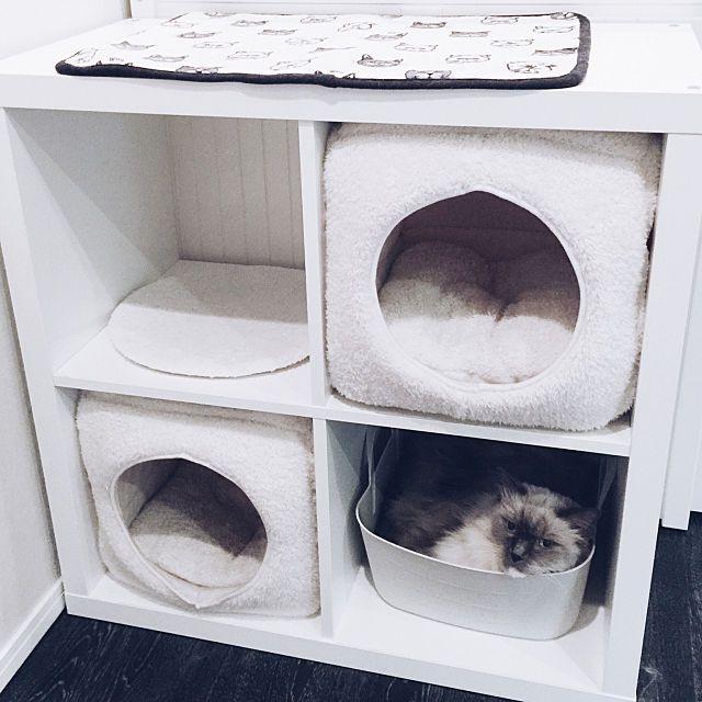 棚 ラック イケア Ikea 3coins などのインテリア実例 2017 11 06 18 35 36 Roomclip ルームクリップ 猫と暮らす インテリア イケア