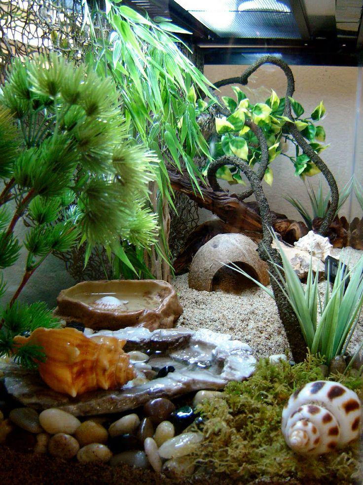 Hermit Crabitat Hermit Crab Life Pinterest Emeralds