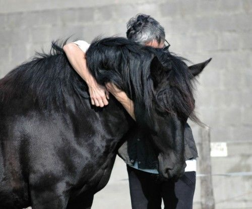 The Horse: Study Shows Co-Being Relationships Between Horses, Riders