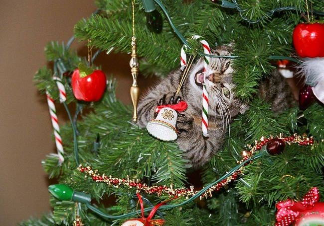The Christmas Destroyer. A Hilarious Compilation Of The Constant Battle Between Cats & Christmas Trees • BoredBug