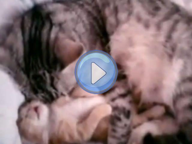 Avez-vous déjà pu remarquer l'amour d'une maman chat pour son petit chaton ? Si ce n'est pas le cas, cette vidéo vous prouvera toute la tendresse qu'un chat peut donner à son bébé. La petite famille dort ensemble, et c'est si mignon ! Et si vous avez déjà vécu cela, vous n'en serez qu'encore plus touché