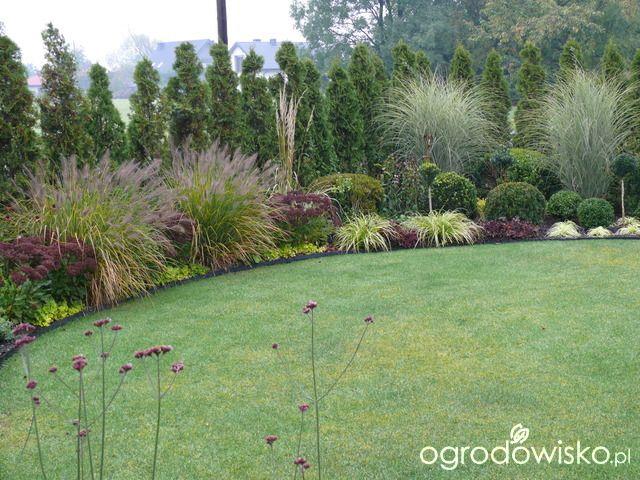 Ogr d ma y ale pojemny strona 107 forum ogrodnicze for Ornamental grasses landscape design ideas
