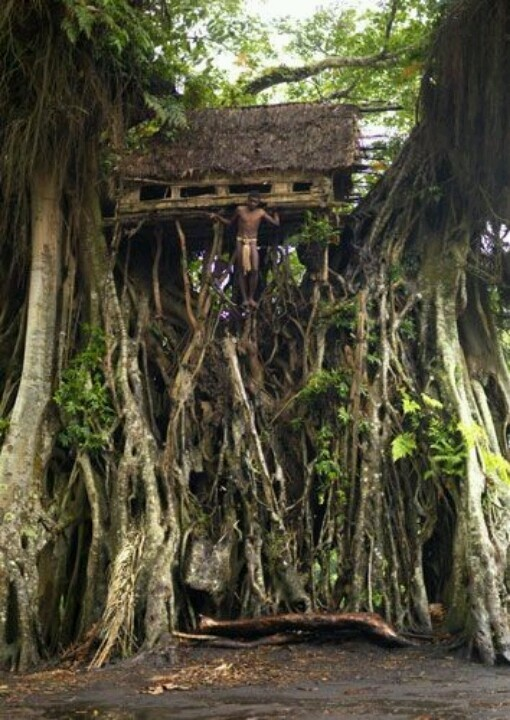 This is a house in the tropical forest on the island Tanna which is one of the islands in Vanuatu.