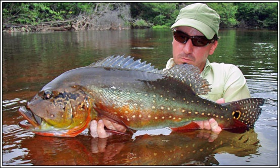 4459 best everything fishing images on pinterest shark for When is the best time to fish for bass