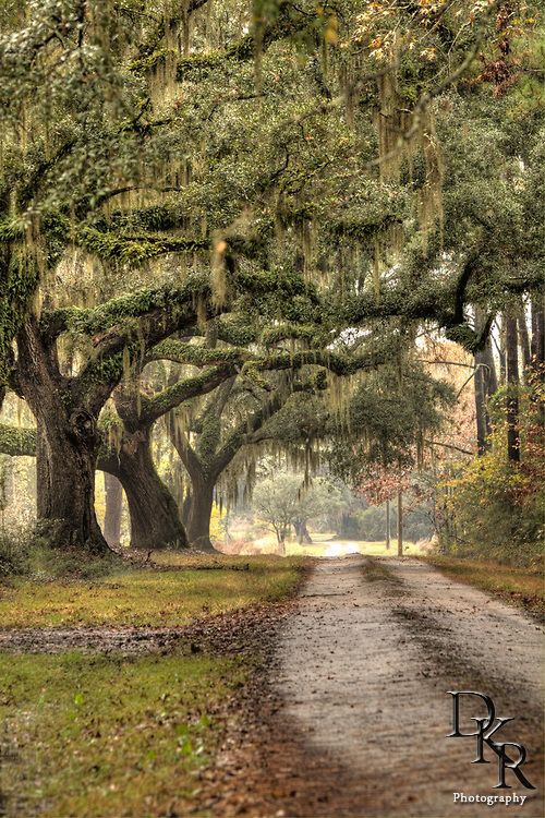 southern plantation road. I love the moss hanging from the trees.