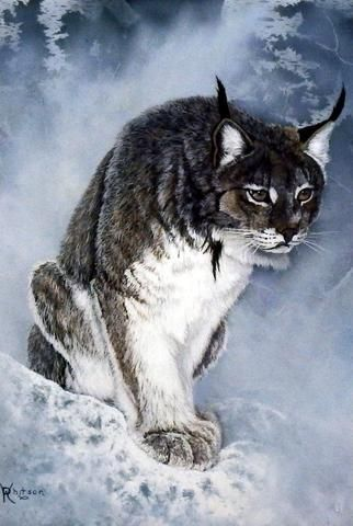 """Ray Whitson has done a portrait of this beautiful lynx hunching over as he trucks through the snow. This print is available unframed in size 8""""x12"""""""