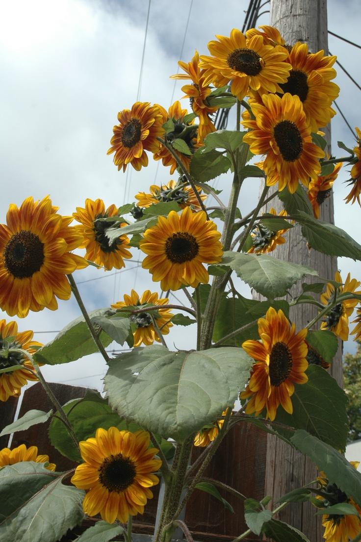 18 best Green Alley images on Pinterest   Small gardens, Backyard ...