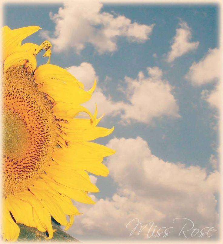 summer, sunflower