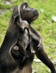Αποτέλεσμα εικόνας για смешные фото животных