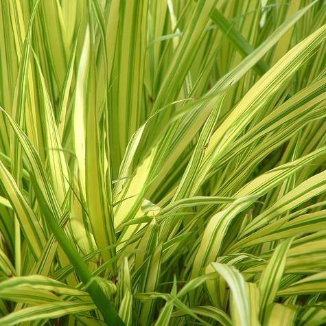 Plante vivace d'ombre : liste - Ooreka