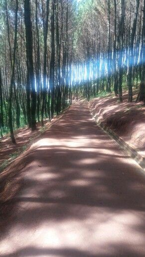 Long road full of oxygen  (bukit moko)