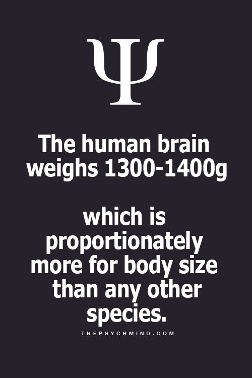 The bigger the brain, the more it retains.