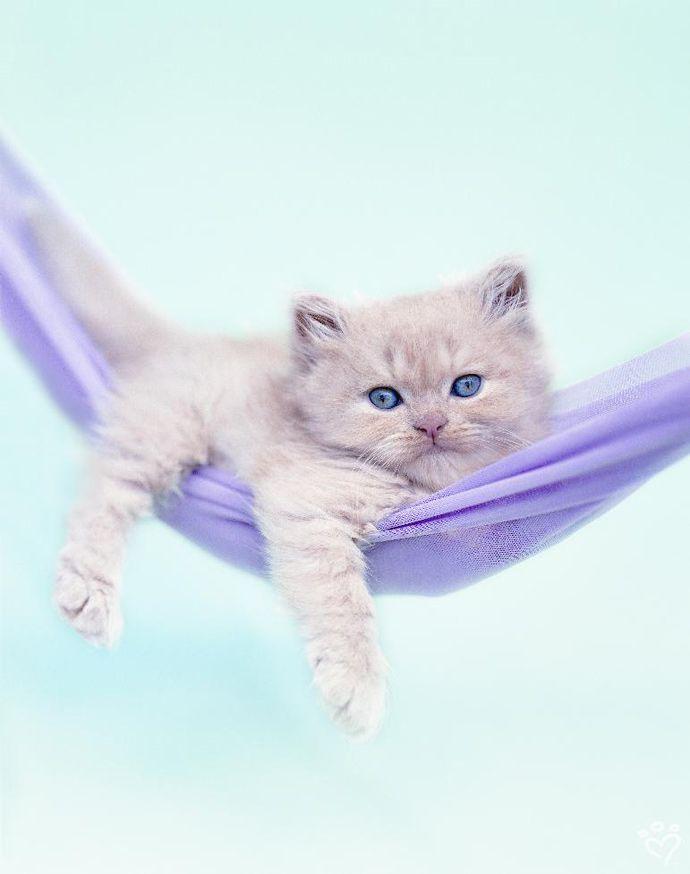 .Rachael Hale photography - kitty in hammock