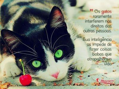 """""""Os gatos raramente interferem nos direitos das outras pessoas. Sua inteligência os impede de fazer coisas bobas que atrapalham a vida."""" #gatos #cats"""