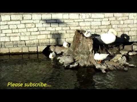 https://www.youtube.com/watch?v=iID_H8D7wtE