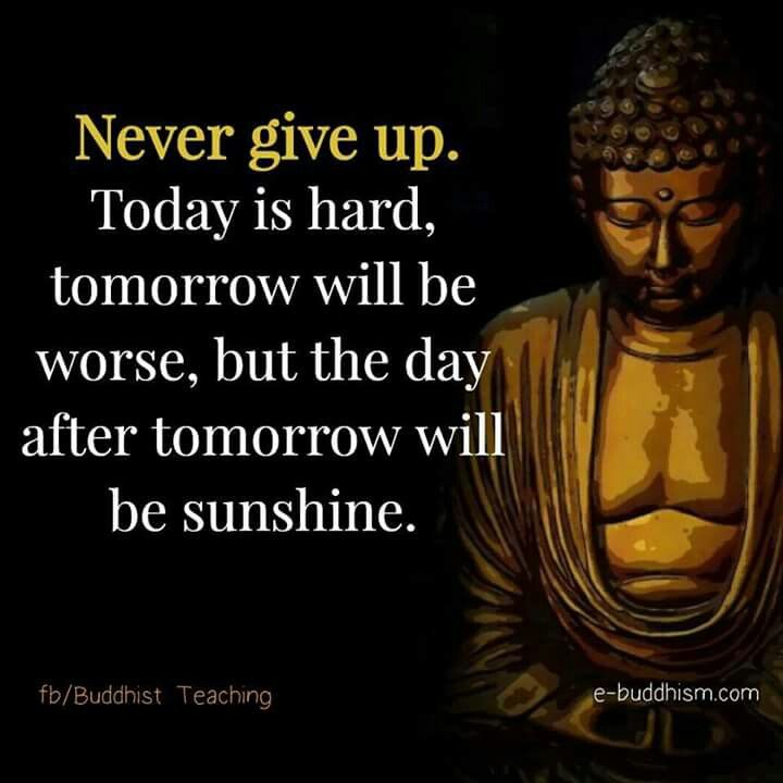 Charming Buddha Quote, Dalai Lama, Amazing Quotes, Inspirational Thoughts, Positive  Quotes, Inspire Quotes, Zen, Buddhism, Success