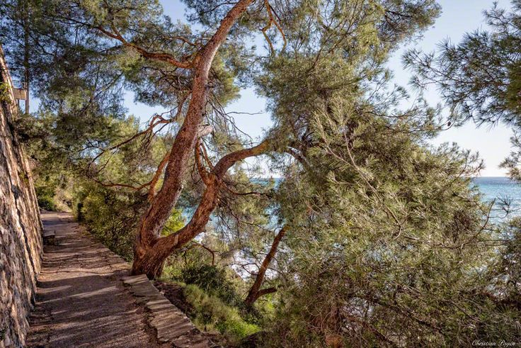 Chemin des dDouaniers, French Riviera, France.