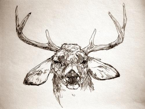 Line Drawing Deer : Cougar lion white tailed deer clip art png download