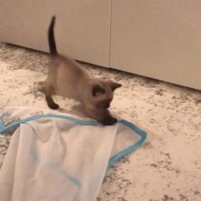 Your Cat Needs A Sheer Fun For Cats Toy Kitten Kittenvideos