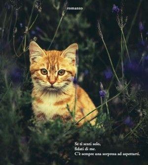 Libri | Vinci il romanzo Il gatto che aggiustava i cuori di Rachel Wells @garzanti