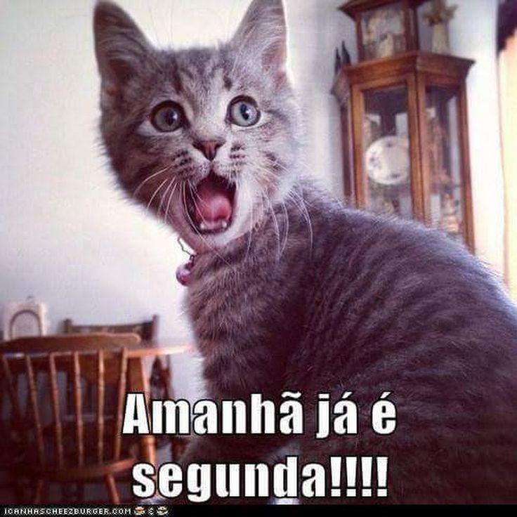 Sério???hehe #petmeupet #gato