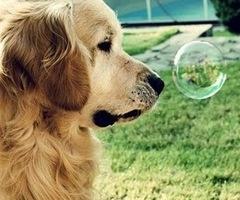 Doggy :)