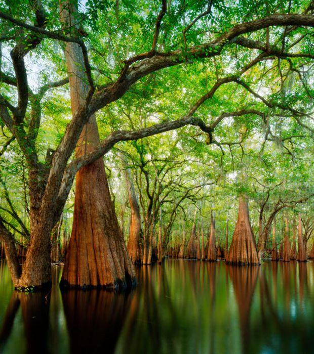 Les 25 meilleures id es concernant le tableau am nagement for Amenagement jardin foret