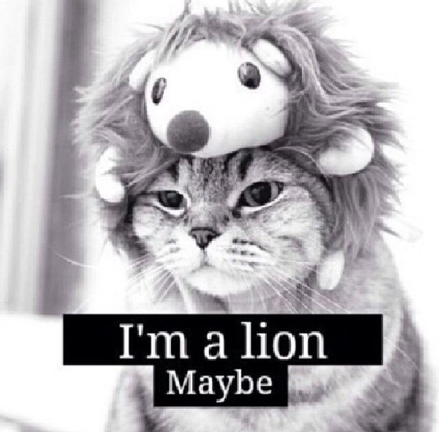 #wallpapers #blackandwhite #black #and #white #lion #sweet #believe #beautiful